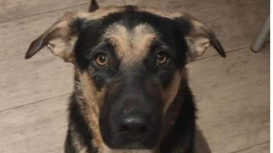 Buscan a Coba, la perra del alcalde Serrano