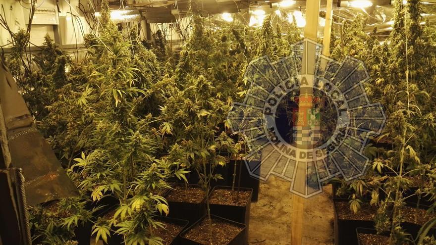 Descubren en Molina de Segura una plantación de marihuana oculta en una nave