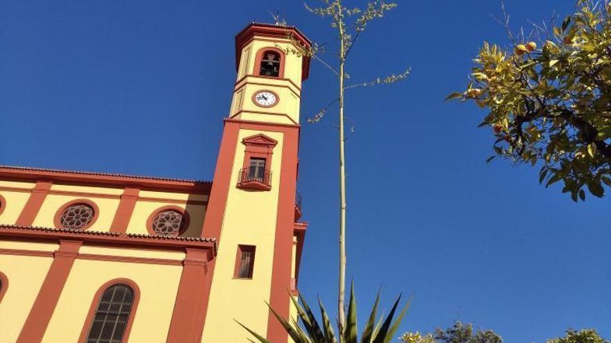Un rascacielos arbóreo en el corazón de Carranque