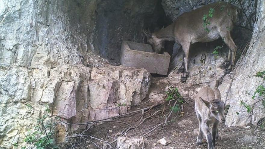 Los cazadores avalan la solución contra la sarna del empresario de la finca de Morella