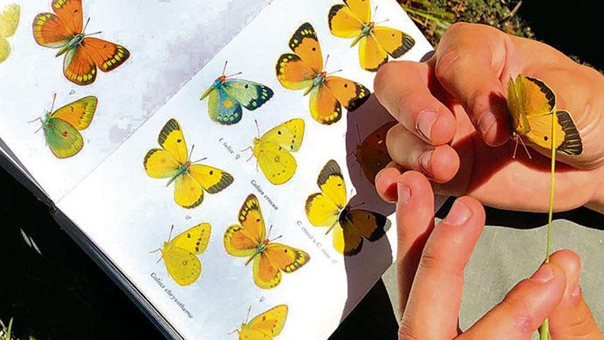 So bunt sind die Schmetterlinge von Mallorca