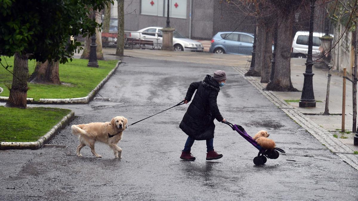 Una mujer pasea a sus mascotas en un día lluvioso en A Coruña.