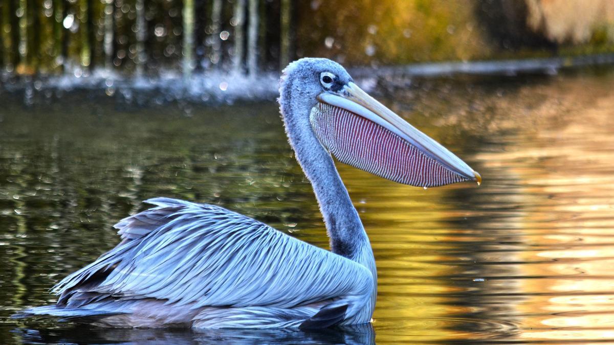 Bioparc permite descubrir la riquiza y diversidad de la fauna africana.