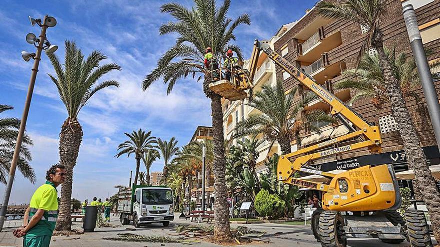 Torrevieja invertirá 480.000 euros en césped artificial para parques
