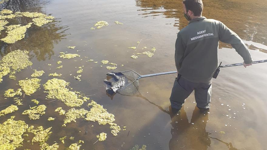 Demanen rampes en basses per a evitar la mort de fauna ofegada