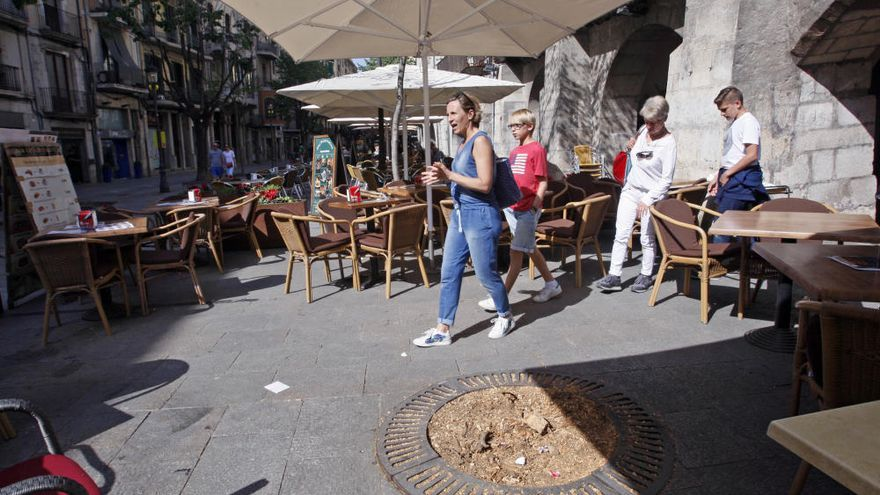 Els restaurants de la Rambla, contra la tala d'arbres que els deixa sense ombra