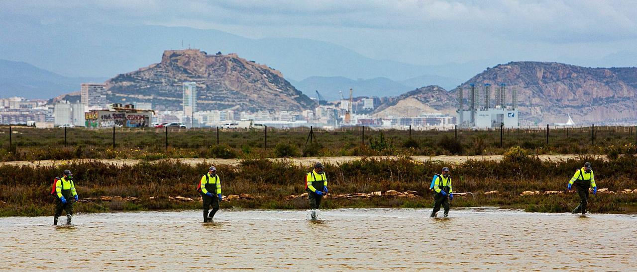 Una brigada de control de plagas durante el tratamiento contra los mosquitos esta semana en las lagunas del Saladar de Agua Amarga, en Alicante.   RAFA ARJONES