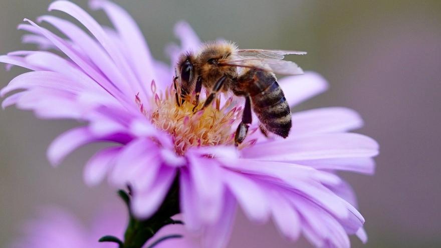 Vespes i abelles, com prevenir i tractar les picades?