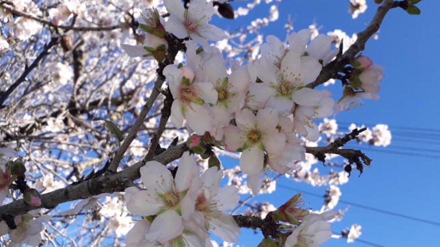 Mandelblüten, Jazz, Akrobatik - die MZ-Tipps fürs Wochenende