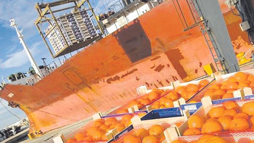 La UE controlará los cítricos de Sudáfrica en origen para evitar que entren plagas en los puertos