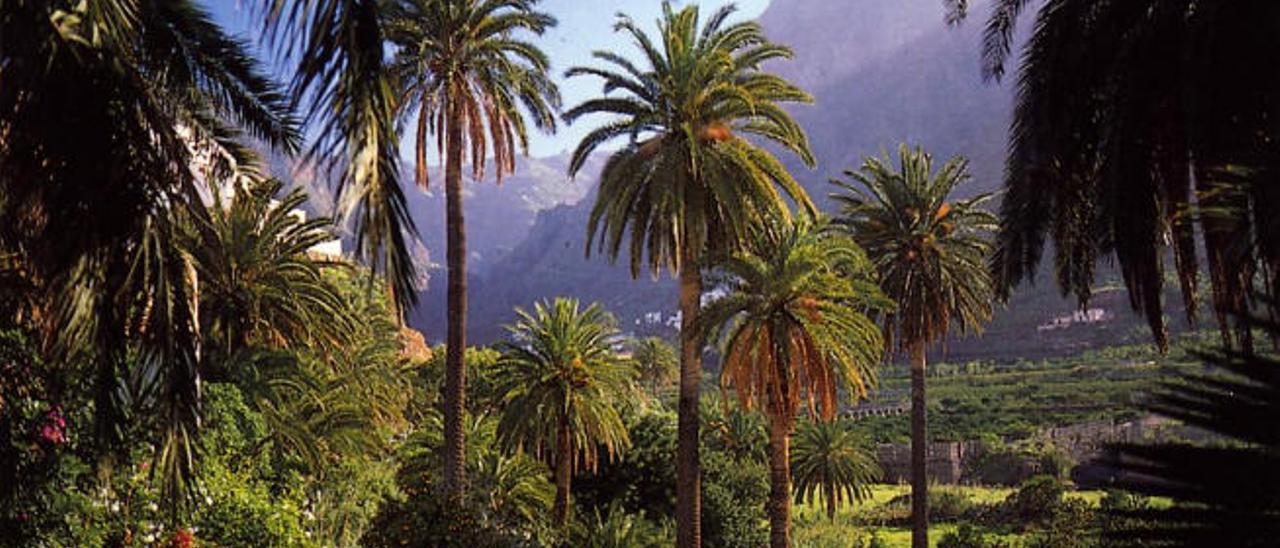 Imagen del Valle de Agaete, que forma la transición geológica entre la isla antigua y la nueva.