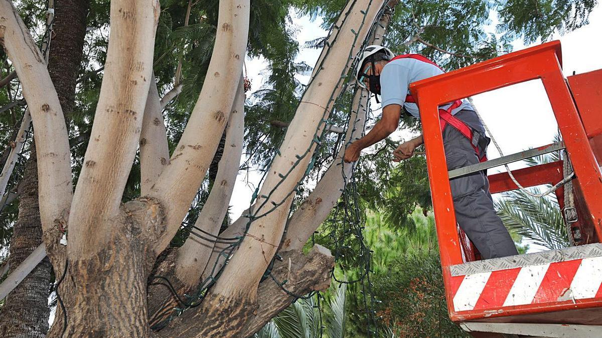 Un operario municipal instalando esta semana luces de Navidad en el centro de Elche. | ANTONIO AMORÓS