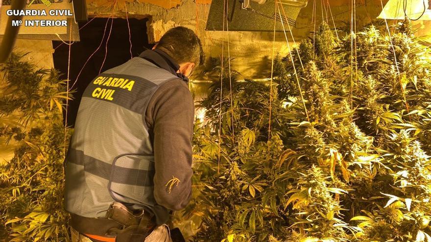La Guardia Civil desmantela una plantación de marihuana en Rojales
