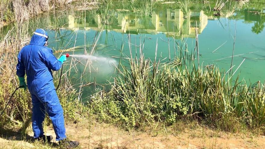 Tercera mort a Sevilla pel virus del Nil