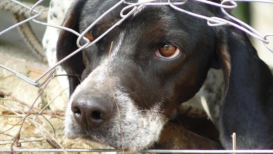 Cuando el animalismo se toma la justicia por su mano