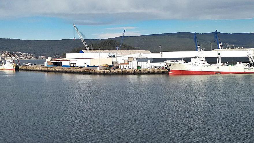 Se intensifica la campaña de descargas de pesca en el Puerto