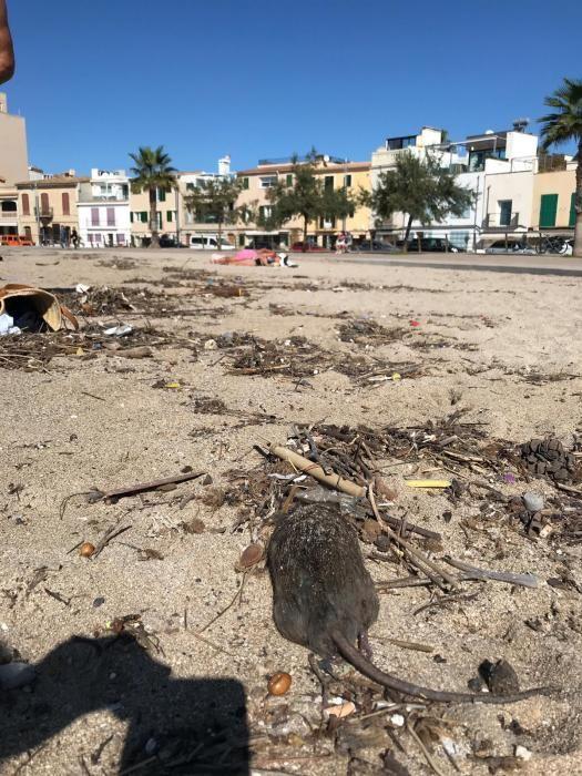 Reinigungsaktion der Stadtwerke Emaya