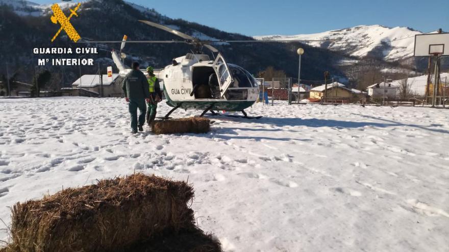 """La resaca de """"Filomena"""": la Guardia Civil lleva comida en su helicóptero a los caballos atrapados por la nieve en Aller"""
