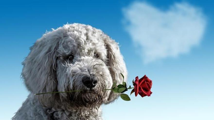 Mi perro es un romántico
