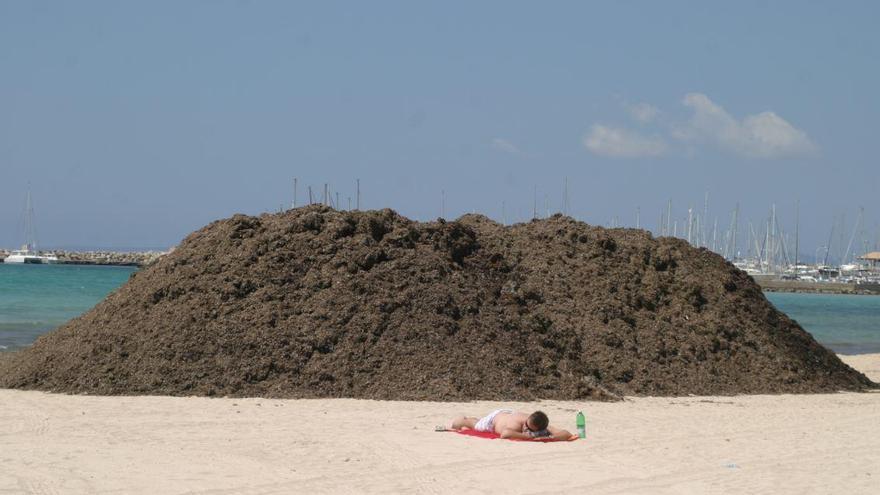 Mallorca koordiniert einheitlichen Umgang mit Seegras-Resten