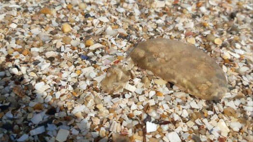Desactivada la alerta por la aparición de medusas en las playas urbanas de Sada