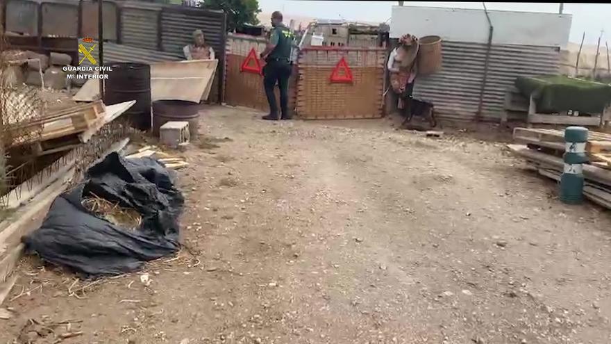 Detenido por dar de comer a sus perros alimentos podridos en Gran Canaria