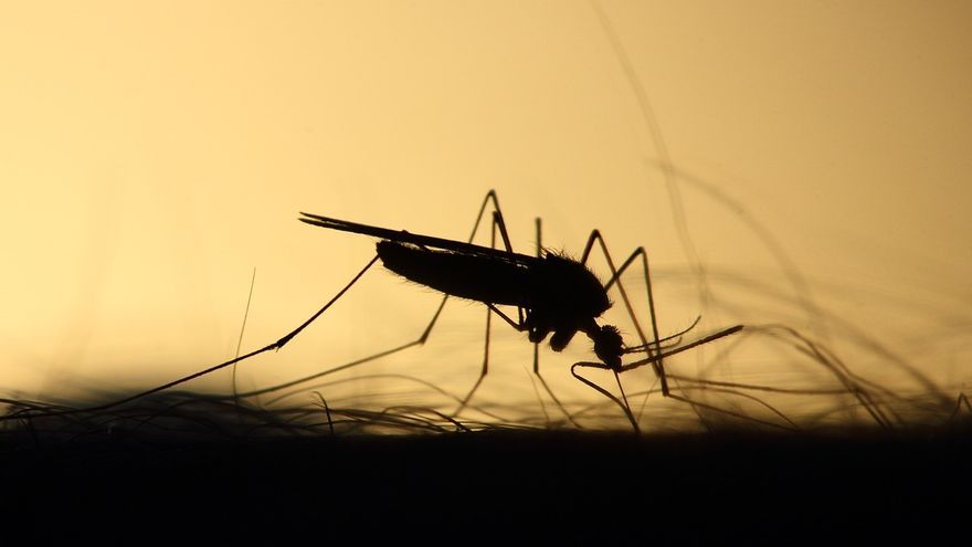 Trucos caseros para acabar con los mosquitos en casa