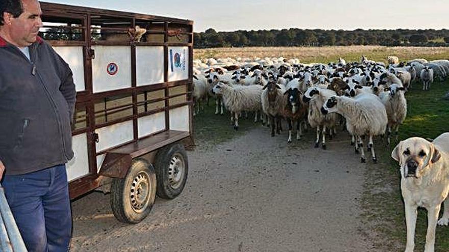La Junta retira pagos de la PAC por importe de más de 300.000 euros a los ganaderos de Fariza