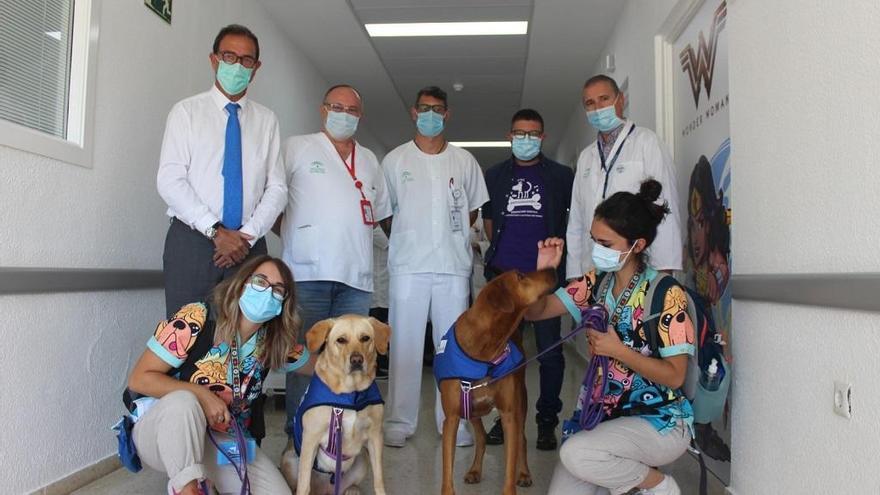 El Hospital de la Axarquía incorpora la terapia asistida con perros en pediatría