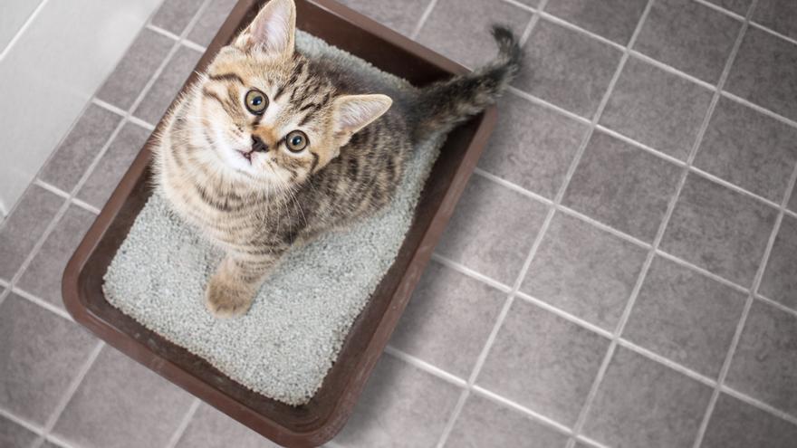 Los gatos se diferencian de otros animales en que prefieren no esforzarse por la comida