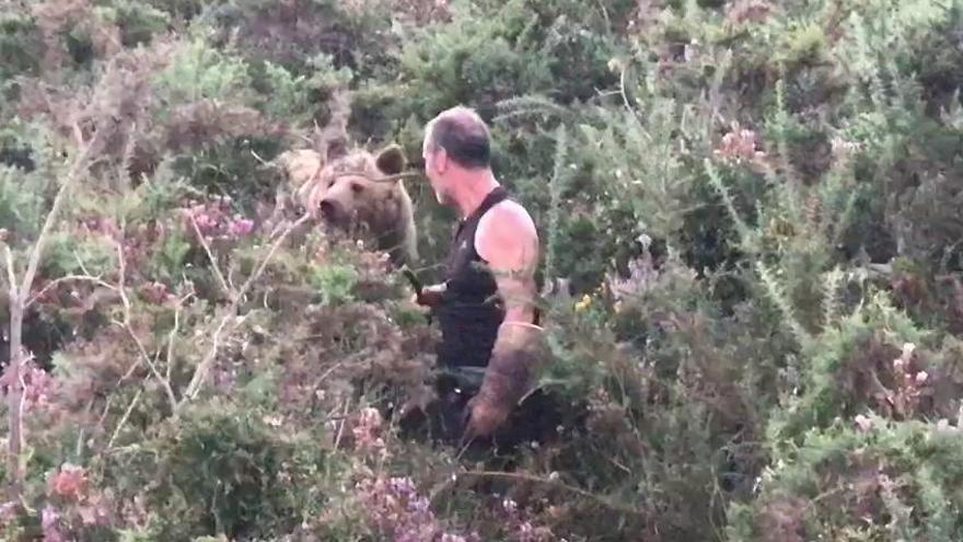 Atención: estos vídeos virales de encuentros con osos no son de Asturias