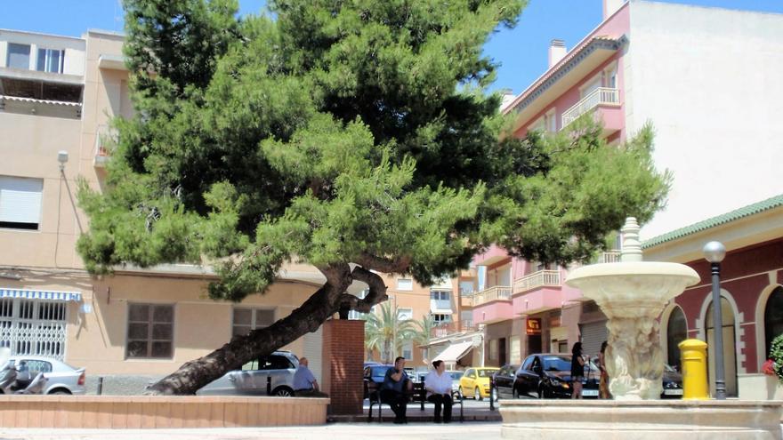 El Pino de La Baia se postula como Árbol Europeo del Año