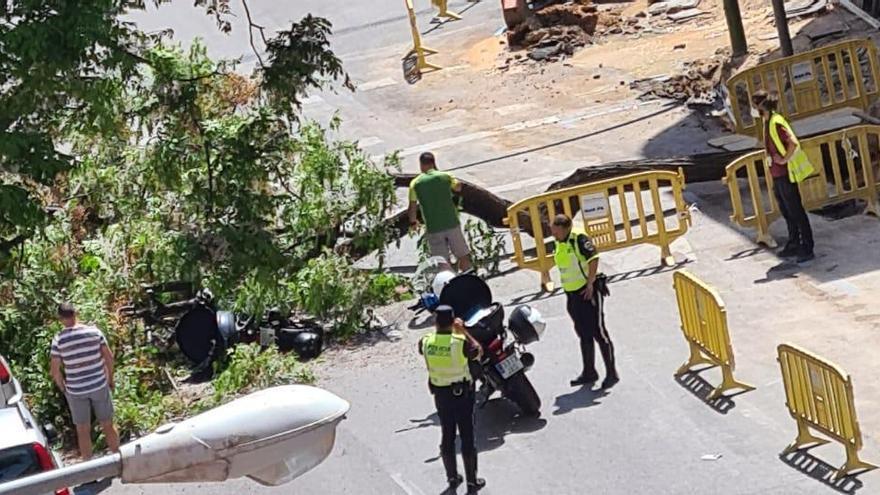 Un motorista, herido leve al caerle encima un árbol en Palma