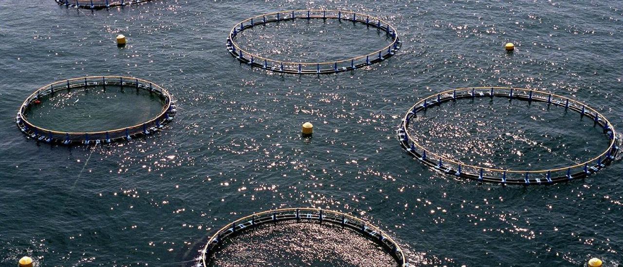 Estanques marinos para la crianza de pescados.