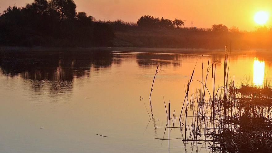 El siluro coloniza el río Magro y amenaza la biodiversidad fluvial