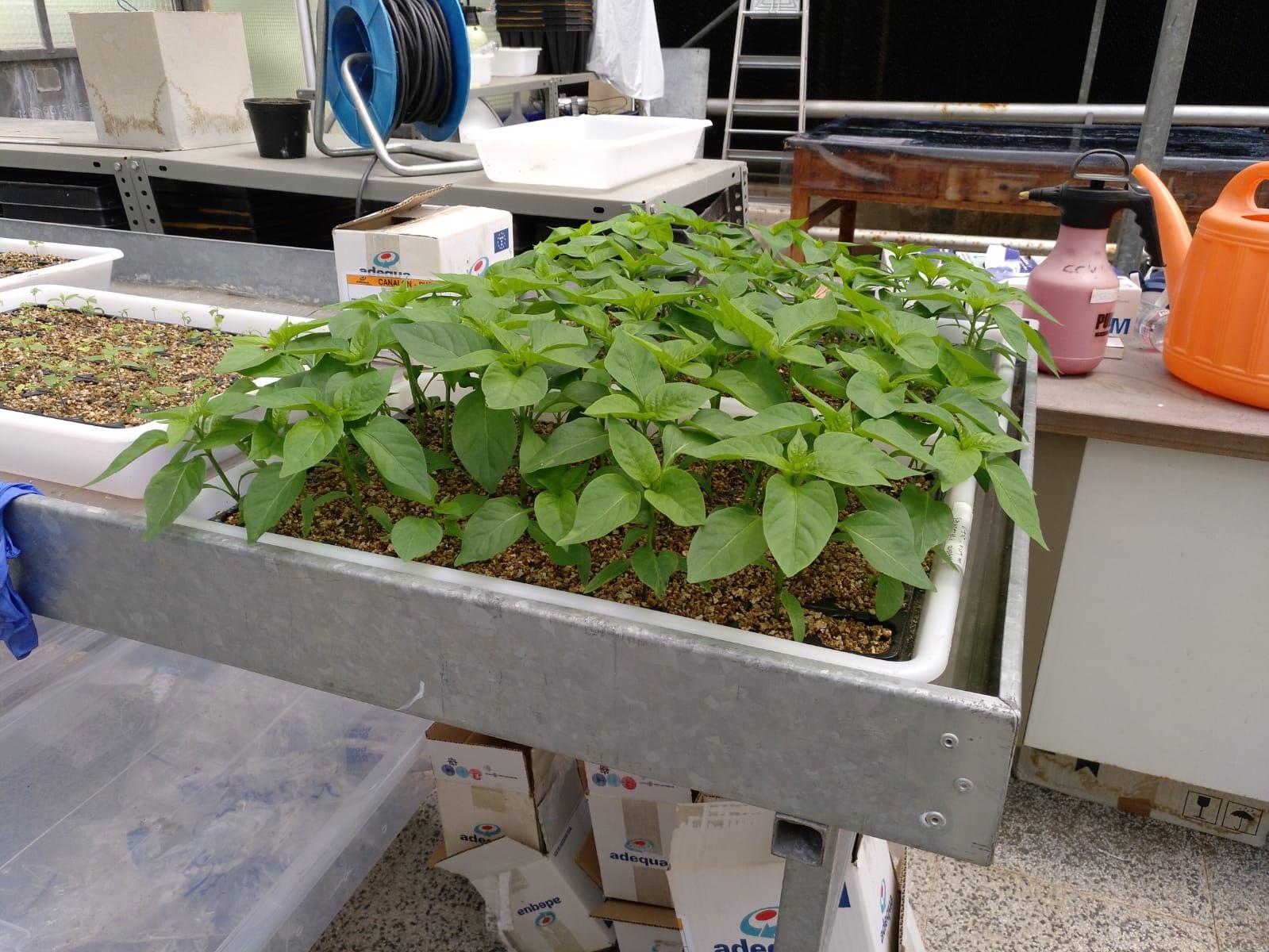Las raíces de las plantas compiten por los nutrientes