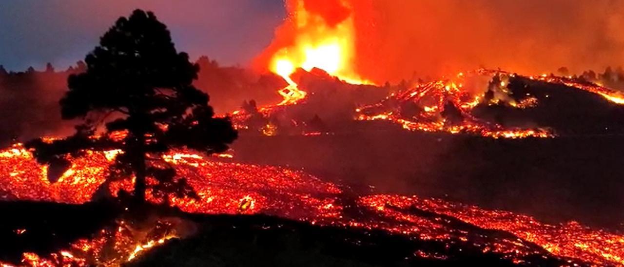 """""""Hay tiempo para comer"""": la pasmosa tranquilidad de un canario tras erupcionar el volcán"""
