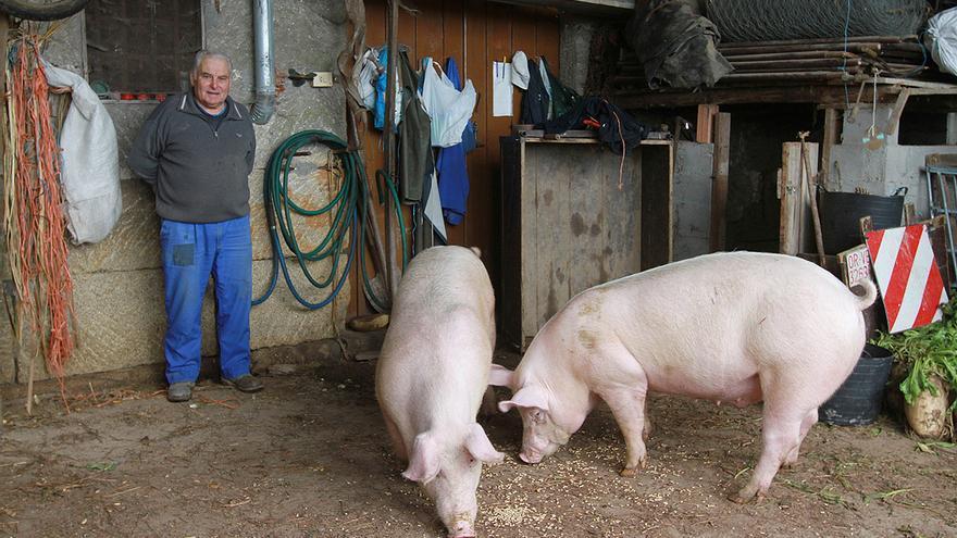 """""""La primera vez que maté cerdos tenía 14 años; este la fiesta será más reducida"""""""