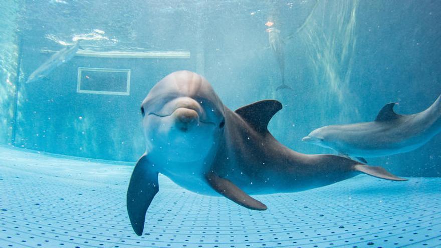 Canadá prohibirá el cautiverio de ballenas y delfines