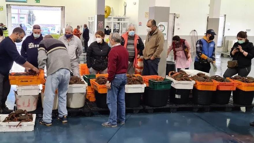 La captura de centollo alcanza su ecuador con registros de récord en Vigo y Ribeira