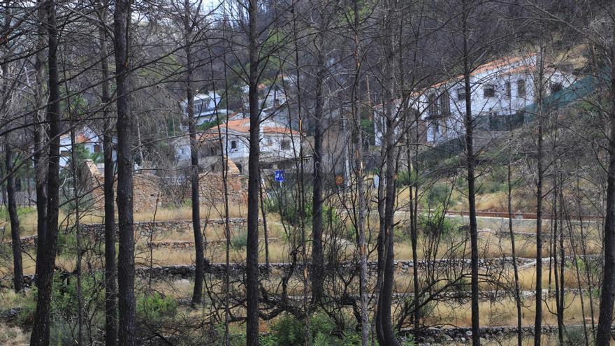 El 25% de los bosques de Gandia se ha quemado  en las últimas dos décadas