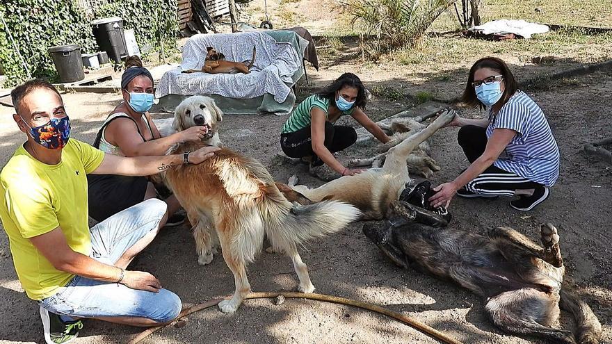 """De Agallas a Europa: """"Hacen 5.000 km para adoptar a perros, fuera hay más conciencia"""""""