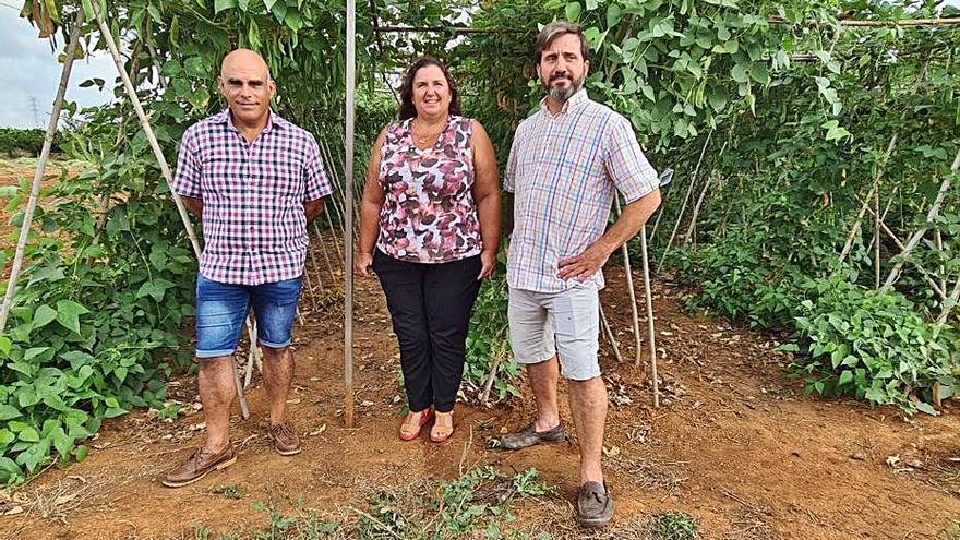 El 'garrofó' pierde el 75 %  de la superficie de cultivo