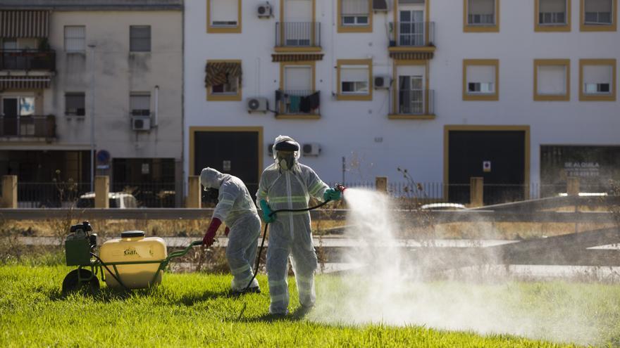 """Crean un """"mapa epidemiológico"""" del virus del Nilo para intentar prevenir brotes"""
