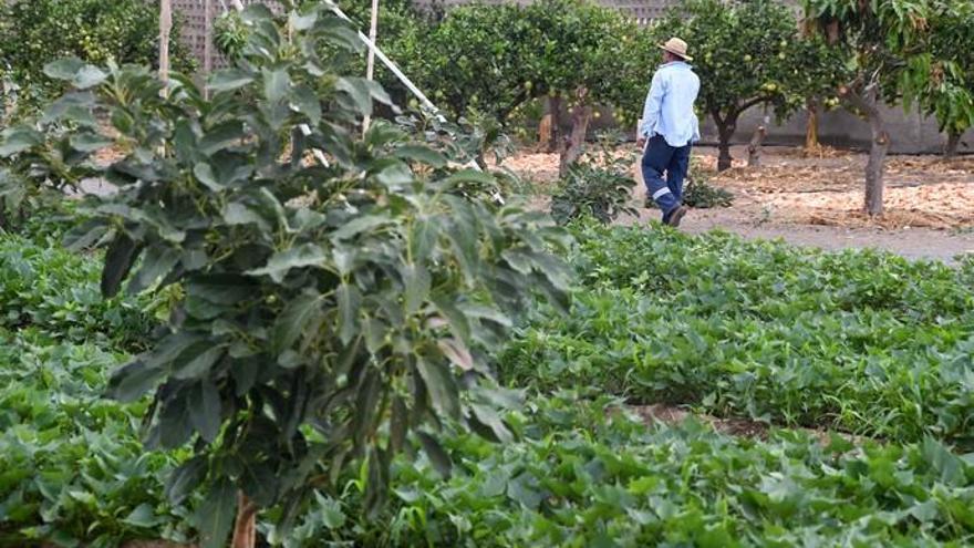 Agricultura para cultivar el futuro