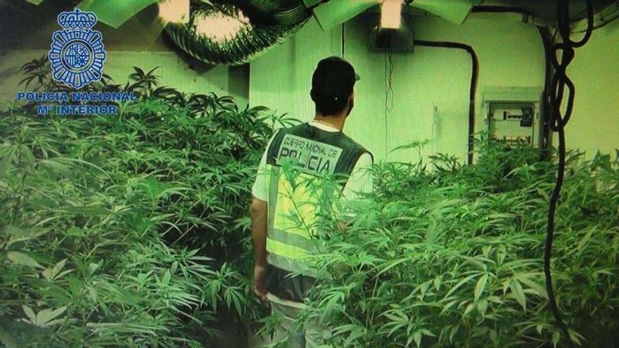 La Policía Nacional desmantela una plantación de marihuana en Badajoz