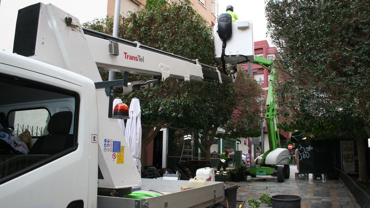 Operarios de Parques y Jardines podando los árboles de Periodista López Barnés, esta mañana.