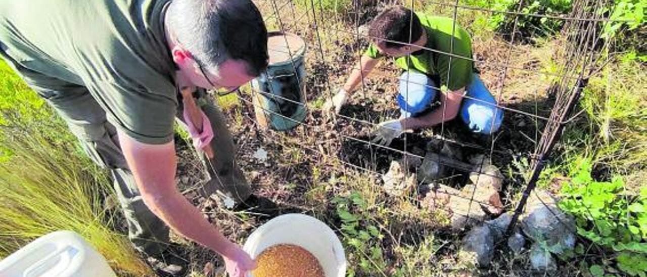 Cazadores del club Matamón de Catadau rellenan uno de los comederos del monte. | LEVANTE-EMV