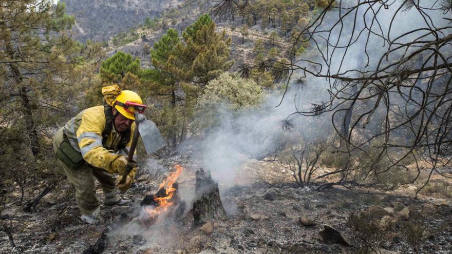 Estabilizado el incendio forestal de Yeste