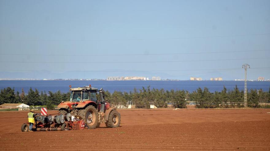 El decreto ley del Mar Menor limita el cultivo de hortalizas a dos ciclos máximo